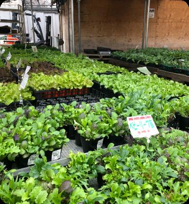 野菜の苗や漬物野菜